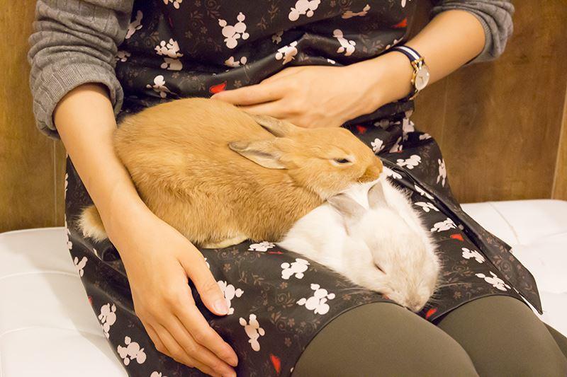 ▲なかには膝で寝てしまうウサギも。