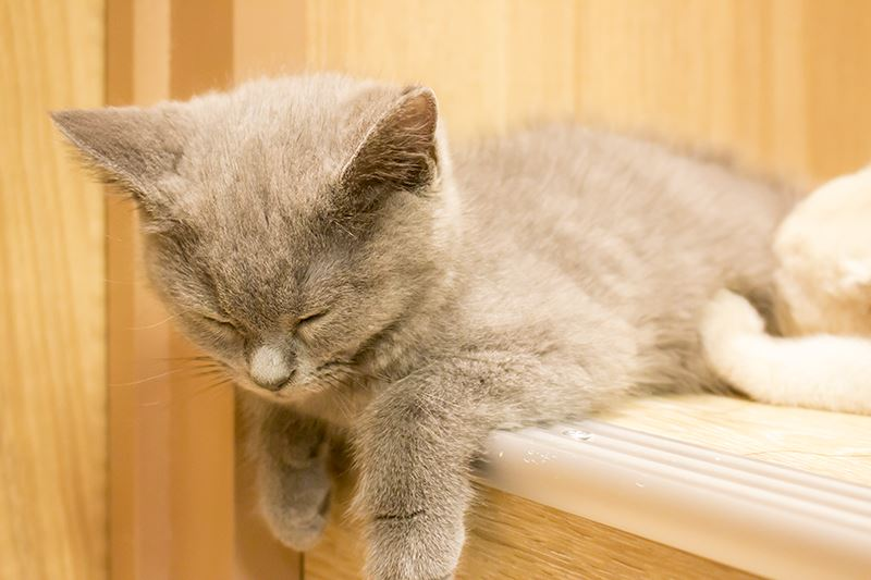 ▲また寝てる猫を……