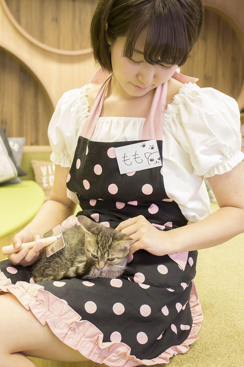 ▲アキバ散策の休憩スポットとしてオススメの「僕と猫。 秋葉原店」。是非癒やされてみよう。