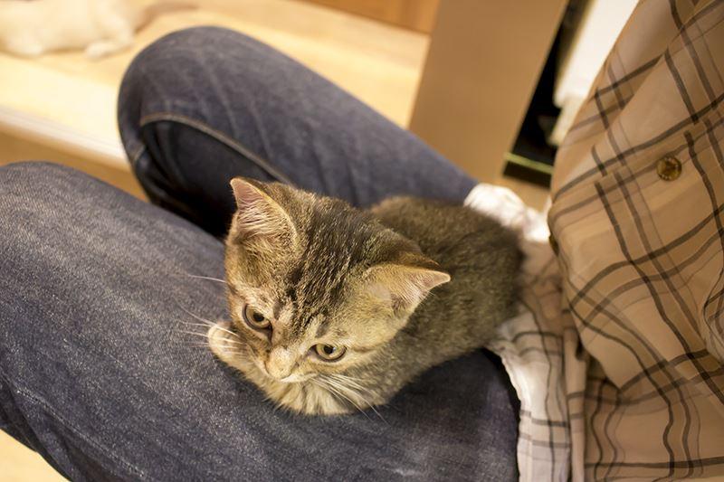 ▲と思ったら膝の上に乗ってくる猫を愛でるも良し。