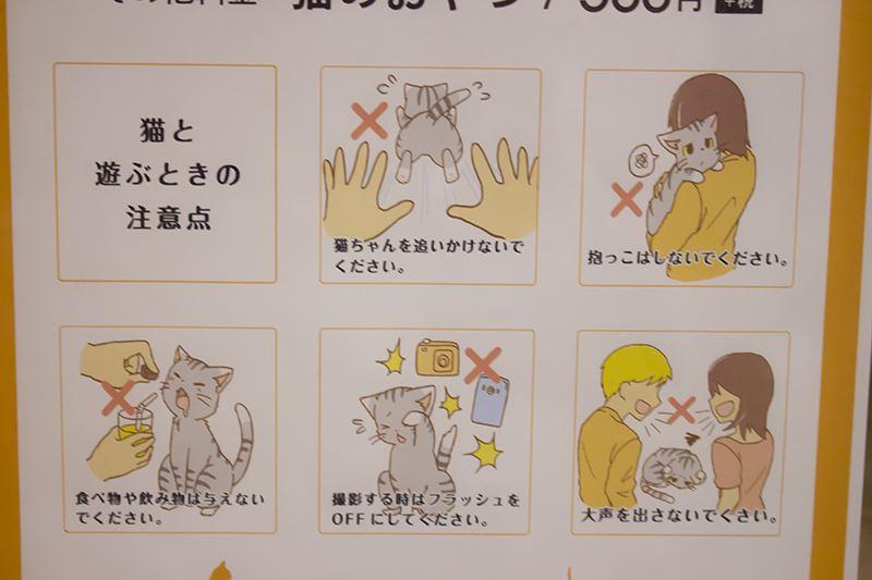 ▲猫と遊ぶ時の注意点。
