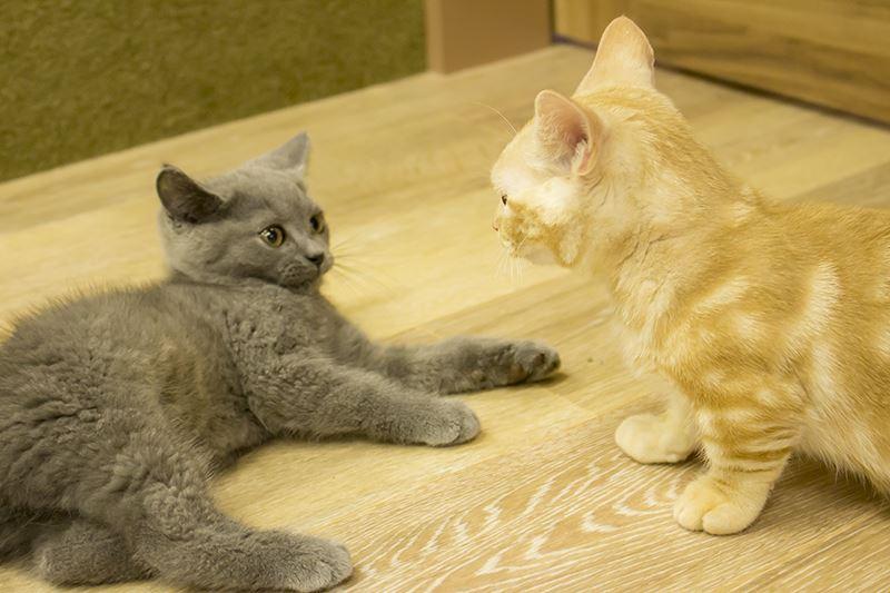 ▲猫同士の……