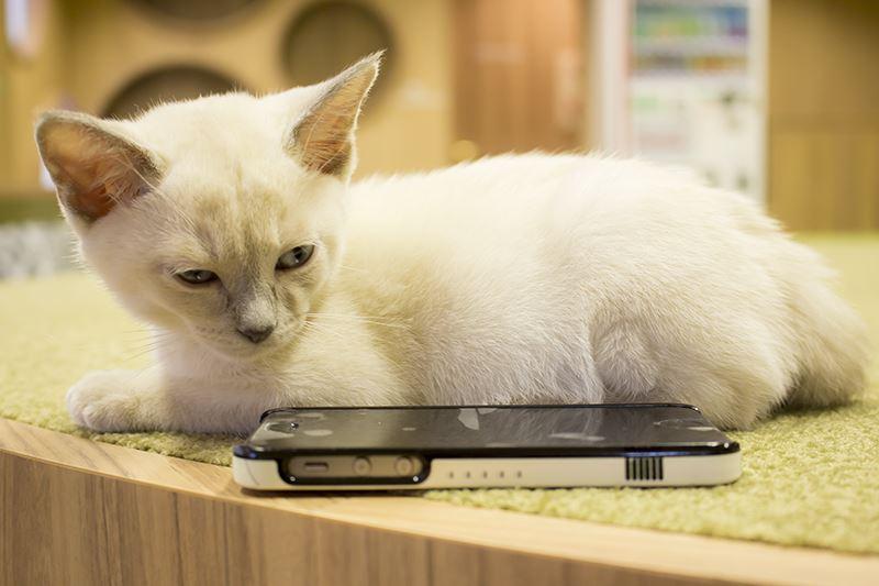 ▲店内の猫は生後数ヶ月の子猫ばかり。